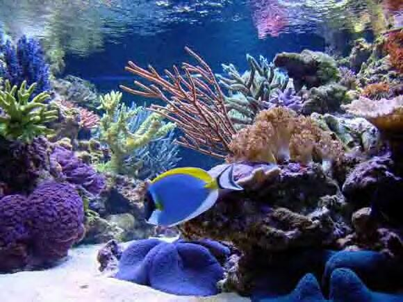 envision acrylics reef tank