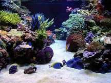 Reef Tank - Click To Enlarge